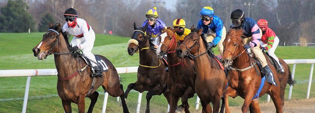 الرهان الحصان